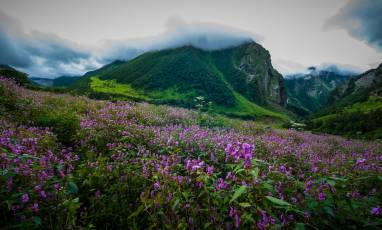 Valley of flowers photo