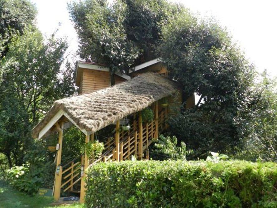 Tree House Cottage, Manali