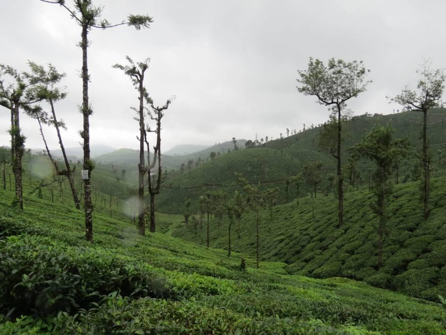 Valparai, Tamil Nadu