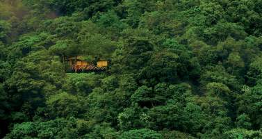 Image of Best tree house resorts in India in the lap of nature