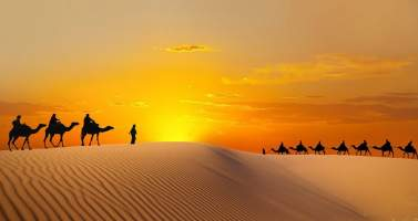 Image of A Tour in Abu Dhabi is Incomplete without Royal Camel Ride On the Golden Desert
