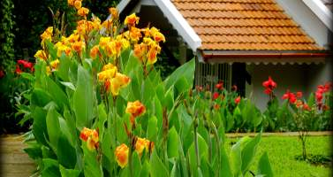 Image of Nirvana Kutira - A Rejuvenating Stay Experience in Chikmagalur