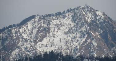 Image of A weekend trip to Shimla (Queen of Hills)