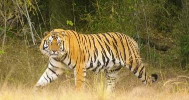Image of Pench National Park: Experience The Territory Of Jungle Book