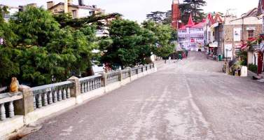 Image of What all to do on a snowy holiday in Shimla